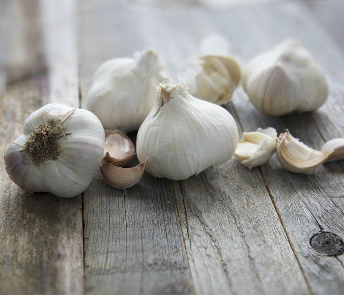 Garlic-Price